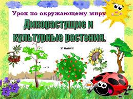 Дикорастущие и культурные растения Презентация к уроку