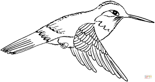 Small Picture click the black chinned hummingbird coloring pages rufous