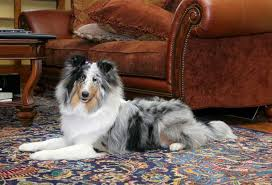 photo a patterned low pile rug is easy to clean so it works well for homes with pets low pile rugs appear flat rather than fluffy and have a tightly