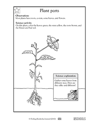 These free plant worksheets are perfect for young scientists! 2nd Grade Science Worksheets Word Lists And Activities Page 7 Of 9 Greatschools