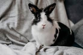 Portret van schattig konijn | Gratis Foto
