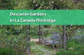 have a green day a visit to descanso gardens in la canada flintridge