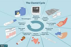 Typical Menstrual Cycle Chart How To Take Clomid For Infertility