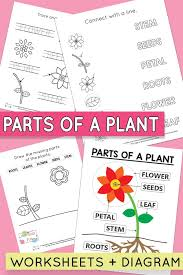 Free Printable Parts of a Plant Worksheets - Itsy Bitsy Fun