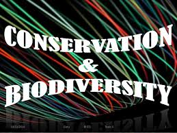 biodiversity essays biodiversity essays so what is biodiversity we will explore some of the factors that influence biodiversity in the essays presented on this site