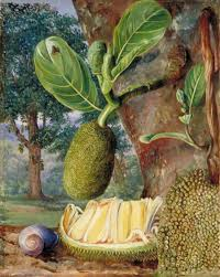 jak fruit singapore 1876 by marianne north 1830 1890 united kingdom famous paintings reions