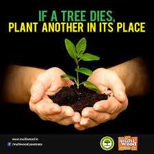 save trees tree plantation and conservation
