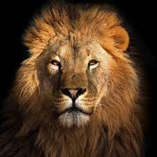 World Lion Day 2021: History and Significance