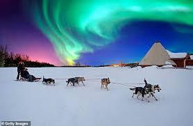 Lifelong Dream Go Wild With Huskies Fulfilling A Lifelong Dream In Snowy