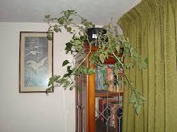 indoor tomato garden. Put On Shelves Indoor Tomato Garden