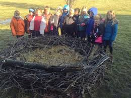 eagles nest size first grade building a bald eagle nest st mary catholic school