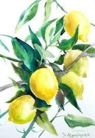 lemon tree x: lemons lemon tree original watercolor painting  x  in oriignal art fruits art yellow green kitchen art more
