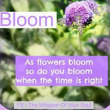 Quotes About Flowers Blooming New Flower Bloom Quotes