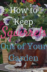 how to keep squirrels out of garden. Tired Of Squirrels Ruining Your Garden? Get Some Tips On How To Keep Out Garden