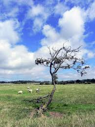 Field of sheep 2 by Josie Gilbert | Fields photography, Field, Sheep