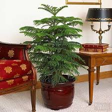 lighting for houseplants. 24 of the easiest houseplants you can grow lighting for