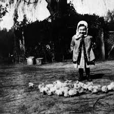 Helen Stanley Smith with a flock of baby chicks, Tustin — Calisphere