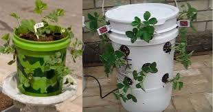 20 gallon bucket. Don\u0027t Give Or Throw Them Away \u2013 Here Are 20 Great Ideas For Repurposing Five Gallon Buckets Bucket