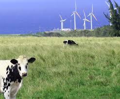 all hawaii news  wind farm on big island