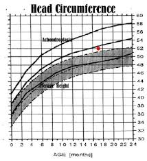 Average Head Size Chart How Life Is Measured Well Charted Territory