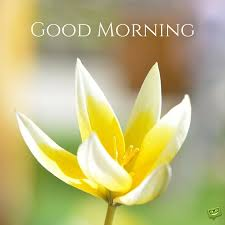 Amazing Good Morning Quotes And Images That Will Inspire You Magnificent Goodmorning Unique Images