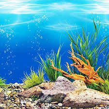 Aquarium background paper HD picture 3d ...