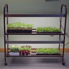 Kitchen Grow Lights Park Seed Vegetable Seeds Flower Seeds Plants Bulbs Trees And