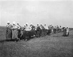 doukhobour women are shown pulling a plough through a field in saskatchewan