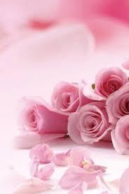 iphone 6 wallpaper pink flower. Beautiful Flower Pink Roses Flowers IPhone 6 Plus HD Wallpaper  Throughout Iphone Flower H