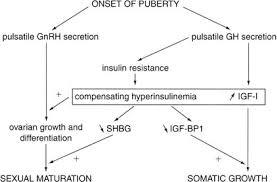 Physiology Of Puberty Glowm