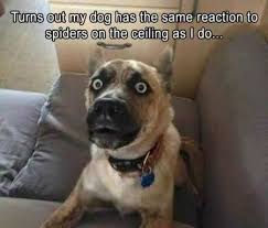 40 Hilarious Animal Pictures Funny Animals Pinterest Funny Fascinating Hilarious
