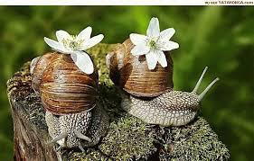 """Résultat de recherche d'images pour """"photos droles escargots"""""""