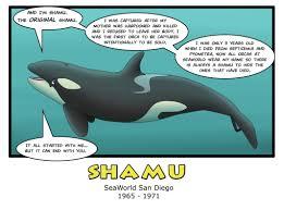 original shamu. Plain Shamu Orca Aware With Original Shamu R