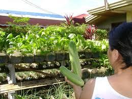 Container Vegetable Gardening 101  Farm And Garden  GRIT Container Garden Ideas Vegetables