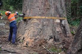 Tree cutting company