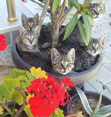 Can't Keep Cats Out of Your Plants try these all Natural Ways?