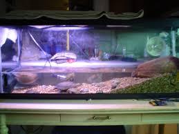 55 gallon turtle tank