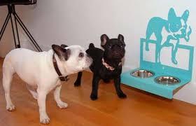 wall mounted pet feeders sustainable