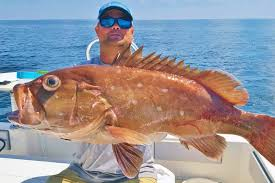 Grouper Species Chart Types Of Grouper In Florida A Short Guide
