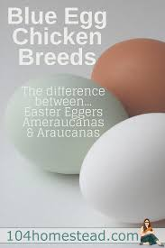 Mixing Chicken Breeds For Egg Color