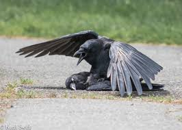Crow Vending Machine Plans Stunning Being A Scientist