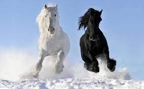 HD Horse Wallpaper Free Download ...