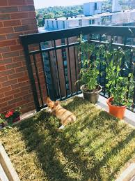 Diy Sod Diy Dog Grass Box For Apartment Pets Of Aurochs And Angels