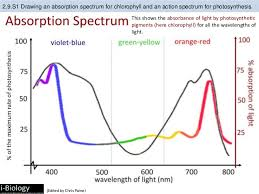 Action Spectrum Bioknowledgy 2 9 Photosynthesis