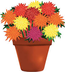 Image result for chrysanthemum clipart