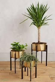 modern office plants. Modern Office Plants Modern Office Plants
