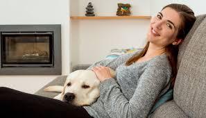 essay english my friend pet dog