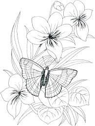 Coloring Pages Of Flowers And Butterflies Free Printable Coloring