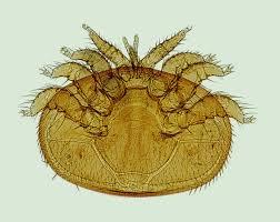7 Methods Of Varroa Mite Transmission