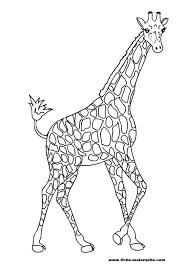 Coloriage Girafe Les Beaux Dessins De Animaux Imprimer Et Colorier